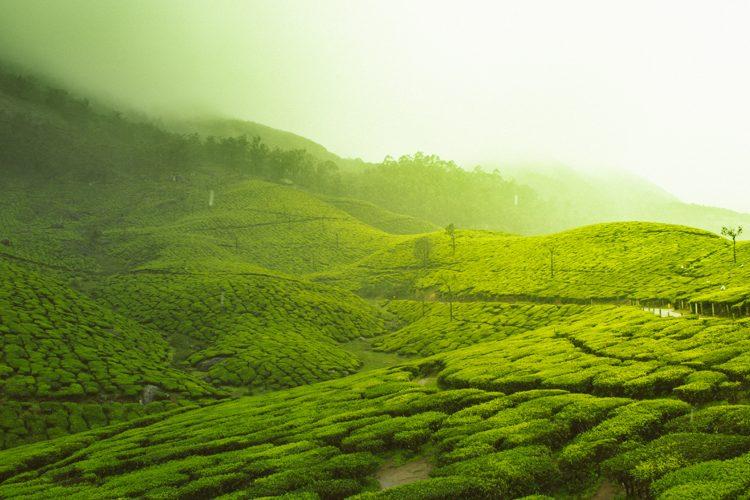 BT Wholesale tea image 800x500